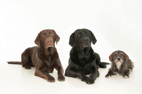 Apollo, Sam und Pipilotta (Hunde)